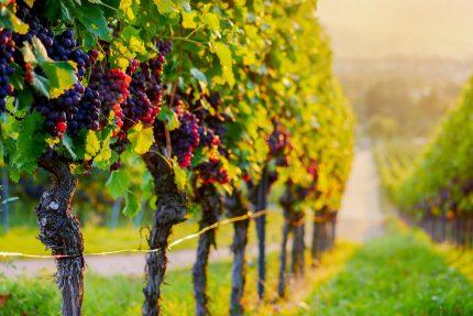 Wein Weinprobe